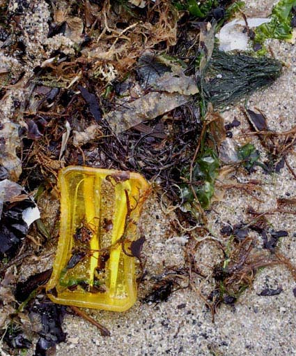 beach_plastic_pencil_sharpener