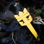 beach_plastic_Y_anchor